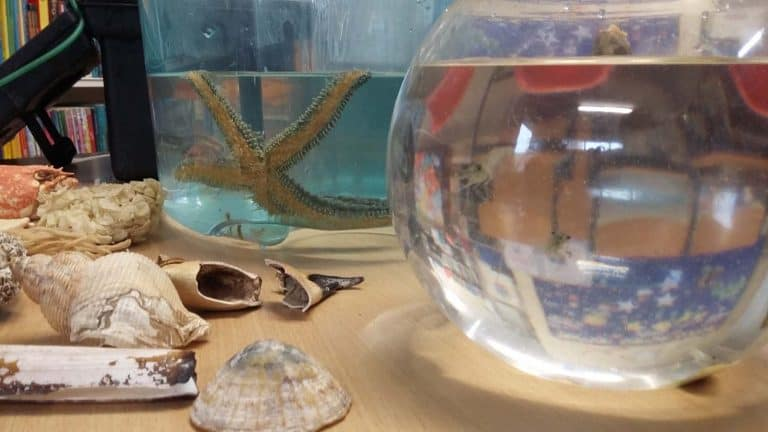 Starfish-marine-environmental-outreach-education
