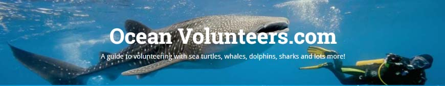 marine-conservation-volunteering
