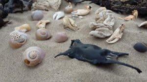 Beach-Seashells-Ireland-SarahVarian-MarineDimensions
