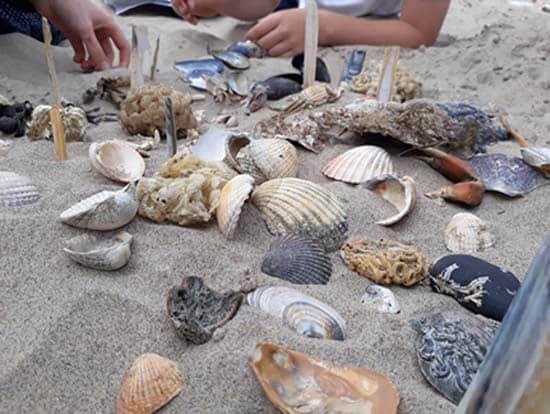 beach-seashells-safari-SarahVarian-MarineDimensions