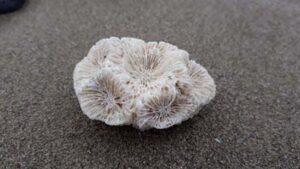 Hard-Coral-beach-SarahVarian-MarineDimensions